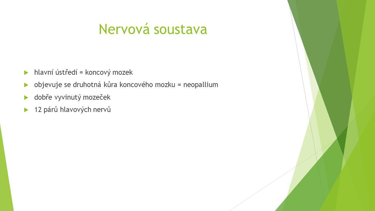 Nervová soustava  hlavní ústředí = koncový mozek  objevuje se druhotná kůra koncového mozku = neopallium  dobře vyvinutý mozeček  12 párů hlavových nervů