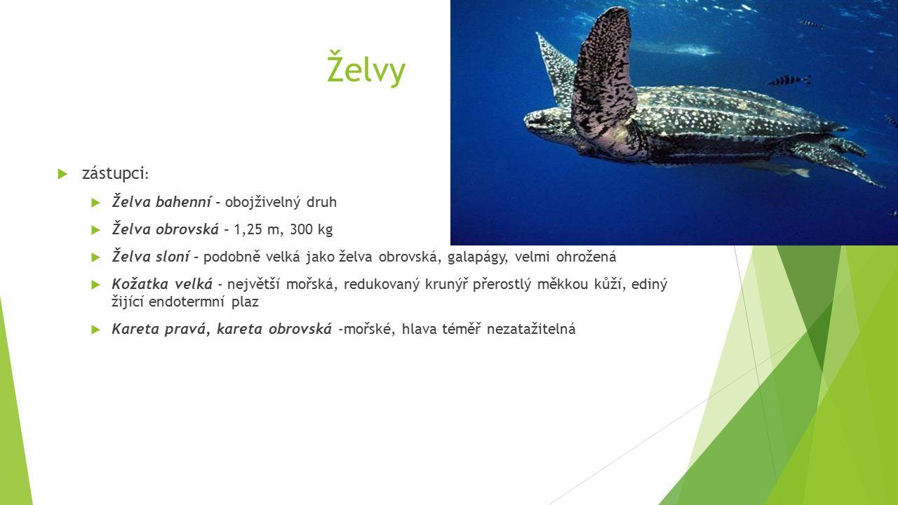 Želvy  zástupci :  Želva bahenní - obojživelný druh  Želva obrovská - 1,25 m, 300 kg  Želva sloní - podobně velká jako želva obrovská, galapágy, velmi ohrožená  Kožatka velká - největší mořská, redukovaný krunýř přerostlý měkkou kůží, ediný žijící endotermní plaz  Kareta pravá, kareta obrovská -mořské, hlava téměř nezatažitelná