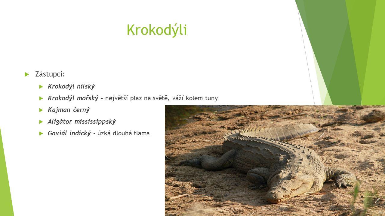 Krokodýli  Zástupci:  Krokodýl nilský  Krokodýl mořský – největší plaz na světě, váží kolem tuny  Kajman černý  Aligátor mississippský  Gaviál indický - úzká dlouhá tlama