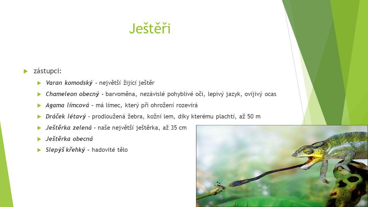 Ještěři  zástupci:  Varan komodský - největší žijící ještěr  Chameleon obecný - barvoměna, nezávislé pohyblivé oči, lepivý jazyk, ovíjivý ocas  Agama límcová – má límec, který při ohrožení rozevírá  Dráček létavý - prodloužená žebra, kožní lem, díky kterému plachtí, až 50 m  Ještěrka zelená - naše největší ještěrka, až 35 cm  Ještěrka obecná  Slepýš křehký – hadovité tělo