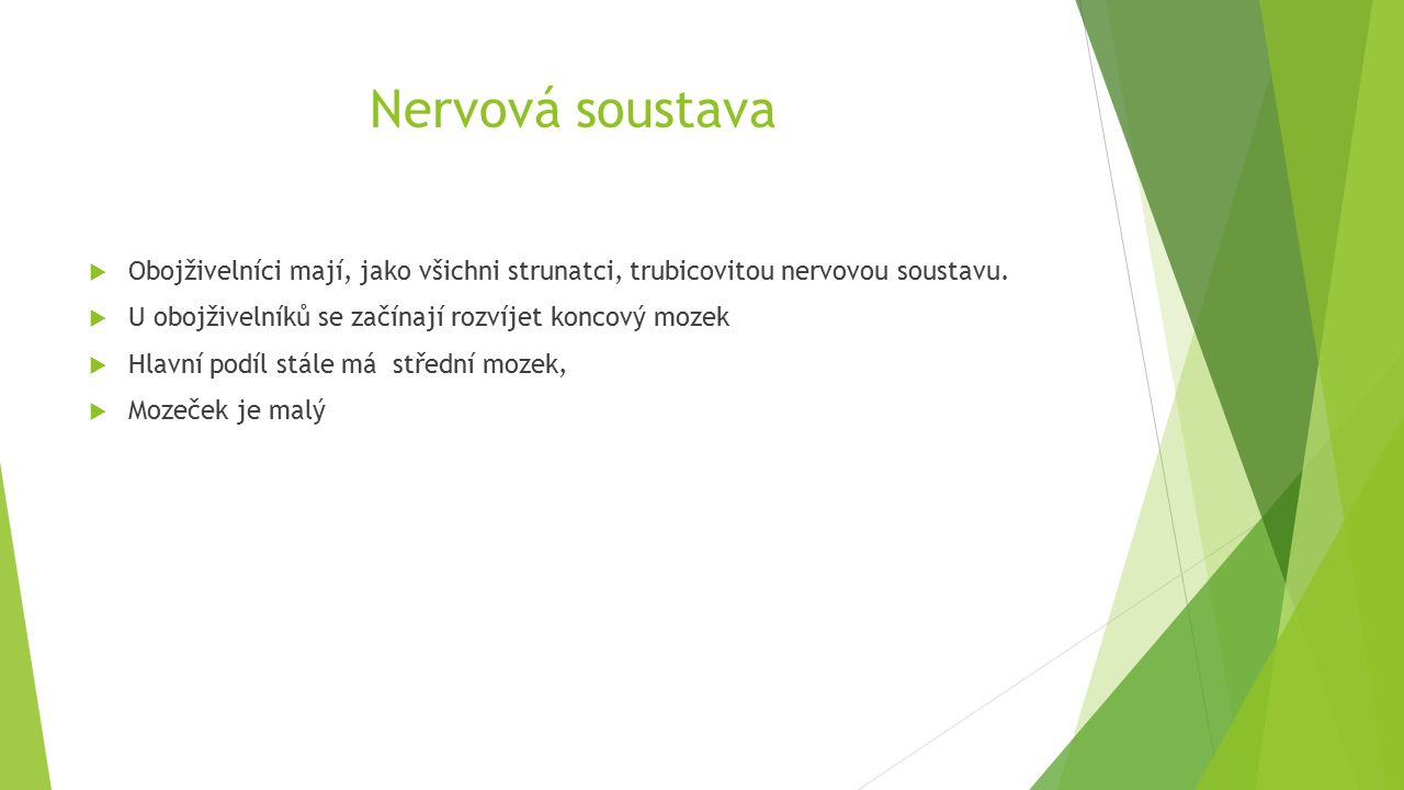 Nervová soustava  Obojživelníci mají, jako všichni strunatci, trubicovitou nervovou soustavu.