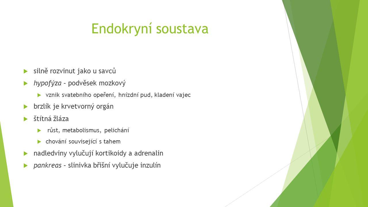 Endokryní soustava  silně rozvinut jako u savců  hypofýza – podvěsek mozkový  vznik svatebního opeření, hnízdní pud, kladení vajec  brzlík je krvetvorný orgán  štítná žláza  růst, metabolismus, pelichání  chování související s tahem  nadledviny vylučují kortikoidy a adrenalin  pankreas – slinivka břišní vylučuje inzulín