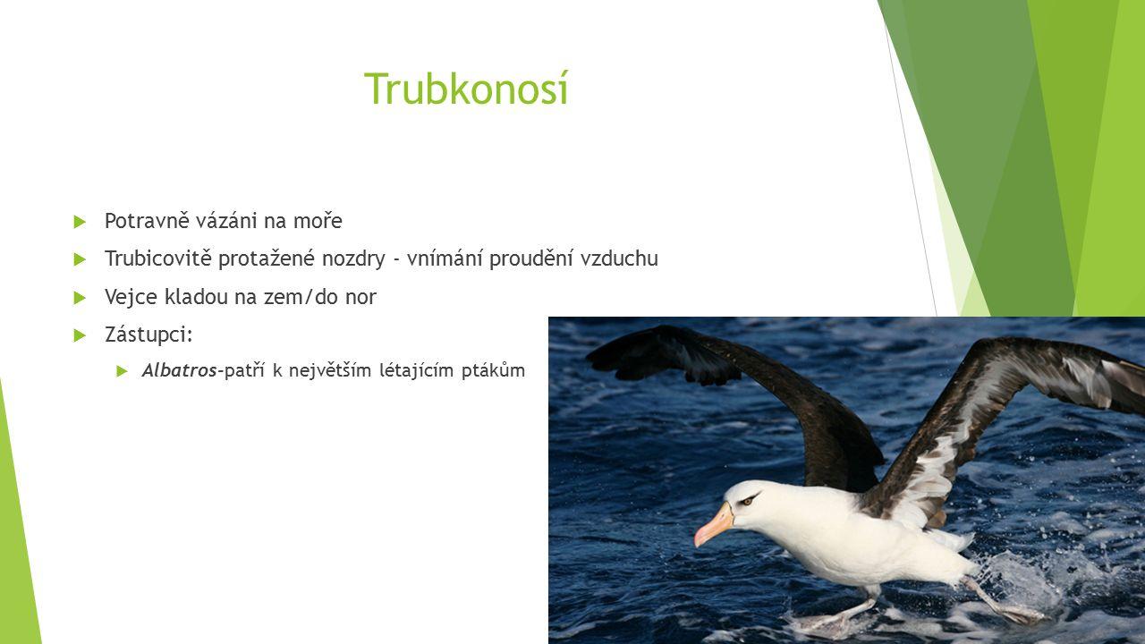 Trubkonosí  Potravně vázáni na moře  Trubicovitě protažené nozdry - vnímání proudění vzduchu  Vejce kladou na zem/do nor  Zástupci:  Albatros-patří k největším létajícím ptákům