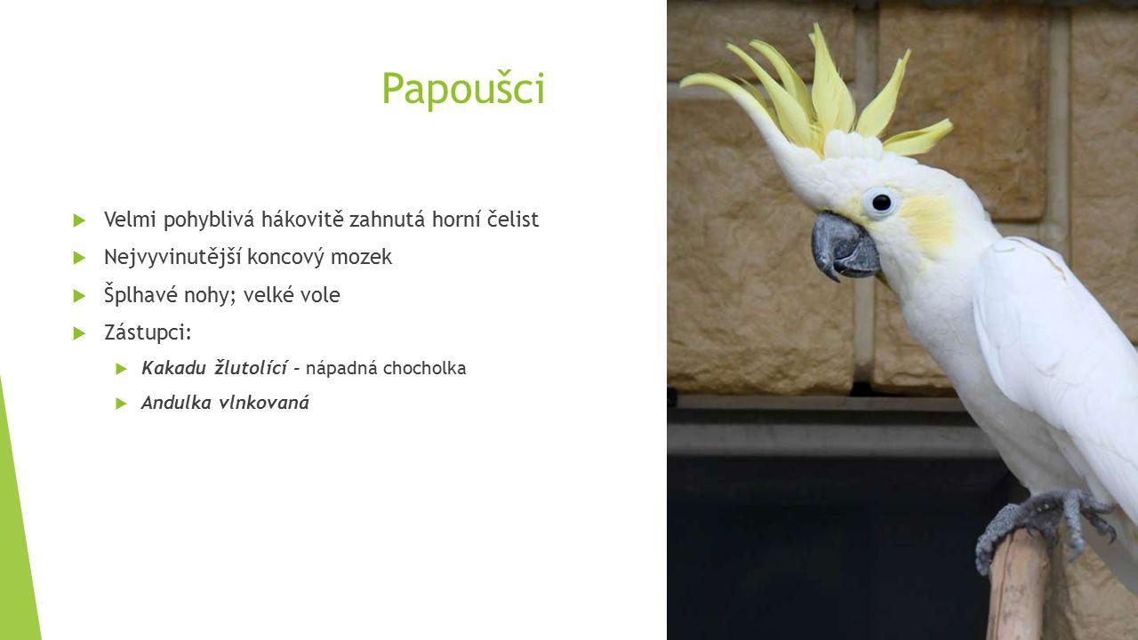 Papoušci  Velmi pohyblivá hákovitě zahnutá horní čelist  Nejvyvinutější koncový mozek  Šplhavé nohy; velké vole  Zástupci:  Kakadu žlutolící - nápadná chocholka  Andulka vlnkovaná