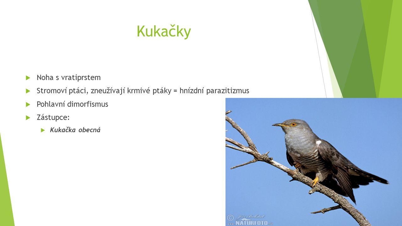 Kukačky  Noha s vratiprstem  Stromoví ptáci, zneužívají krmivé ptáky = hnízdní parazitizmus  Pohlavní dimorfismus  Zástupce:  Kukačka obecná