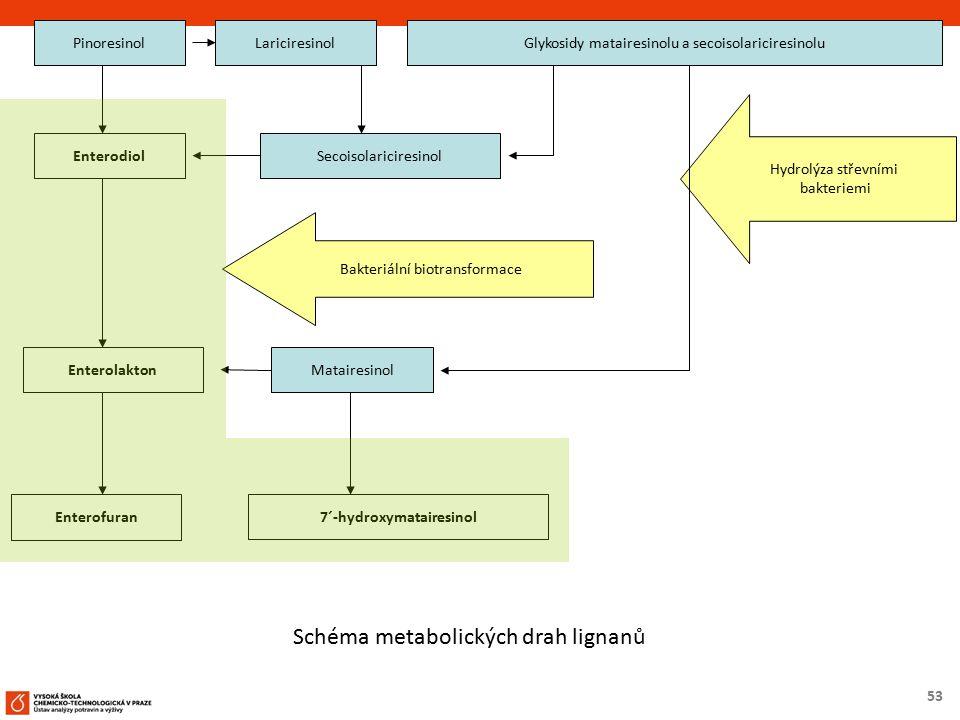 53 PinoresinolLariciresinol EnterodiolSecoisolariciresinol Bakteriální biotransformace EnterolaktonMatairesinol Enterofuran 7´-hydroxymatairesinol Gly
