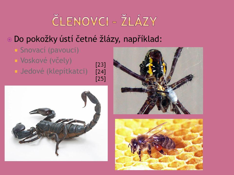  Do pokožky ústí četné žlázy, například:  Snovací (pavouci)  Voskové (včely)  Jedové (klepítkatci) [23] [24] [25]