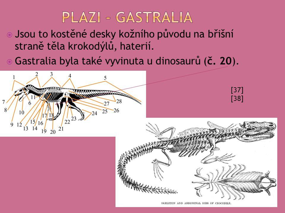  Jsou to kostěné desky kožního původu na břišní straně těla krokodýlů, haterií.