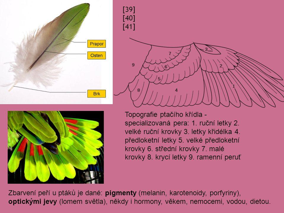[39] [40] [41] Topografie ptačího křídla - specializovaná pera: 1.