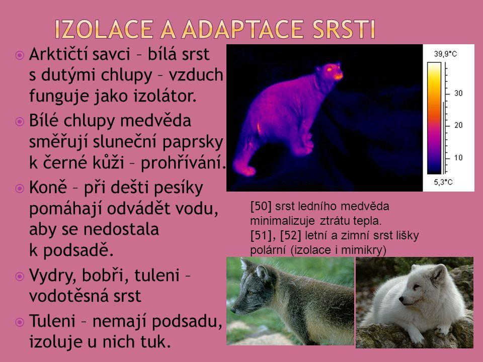  Arktičtí savci – bílá srst s dutými chlupy – vzduch funguje jako izolátor.
