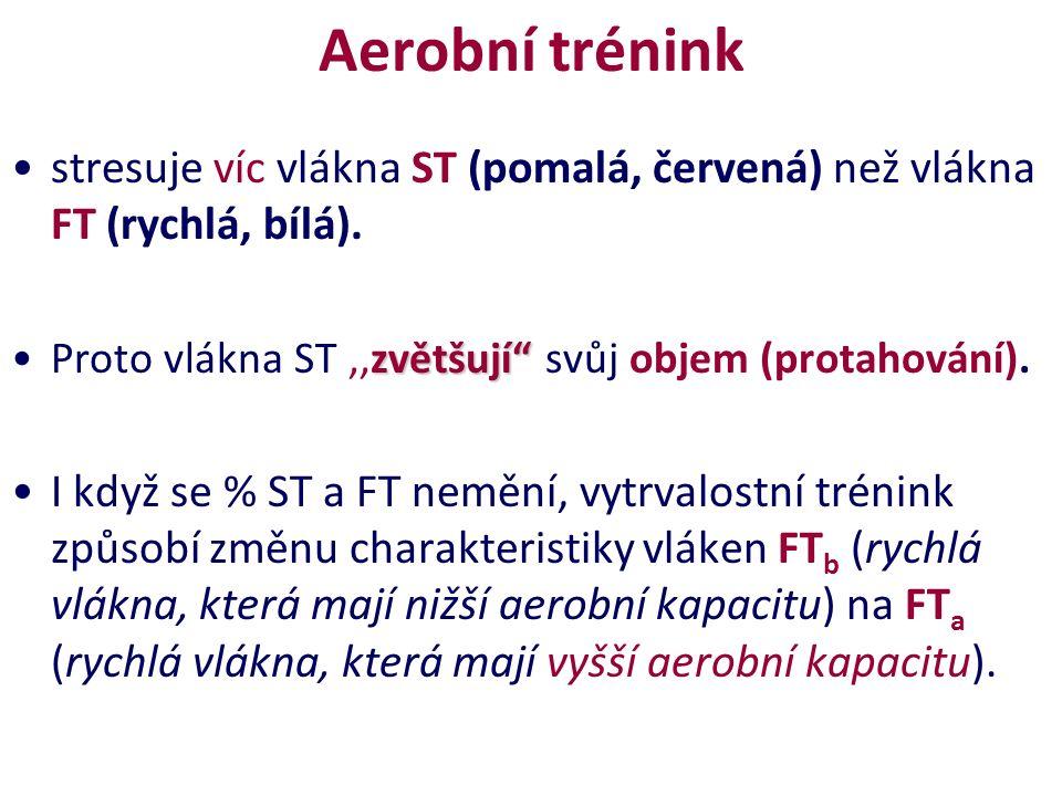 """Aerobní trénink stresuje víc vlákna ST (pomalá, červená) než vlákna FT (rychlá, bílá). zvětšují""""Proto vlákna ST,,zvětšují"""" svůj objem (protahování). I"""