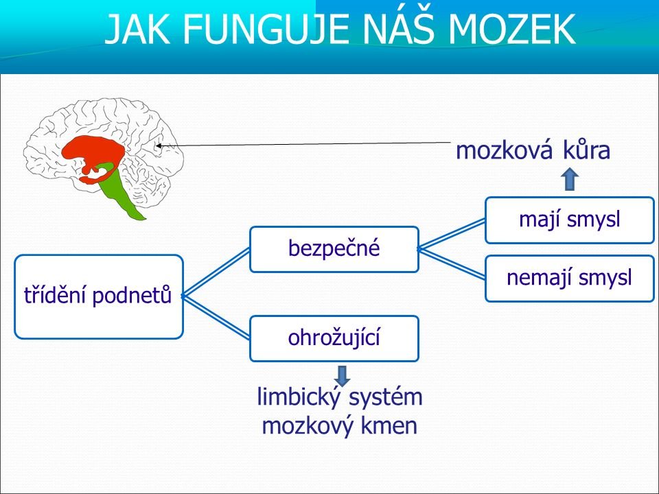 mozková kůra limbický systém mozkový kmen třídění podnetů bezpečné mají smysl nemají smysl ohrožující JAK FUNGUJE NÁŠ MOZEK