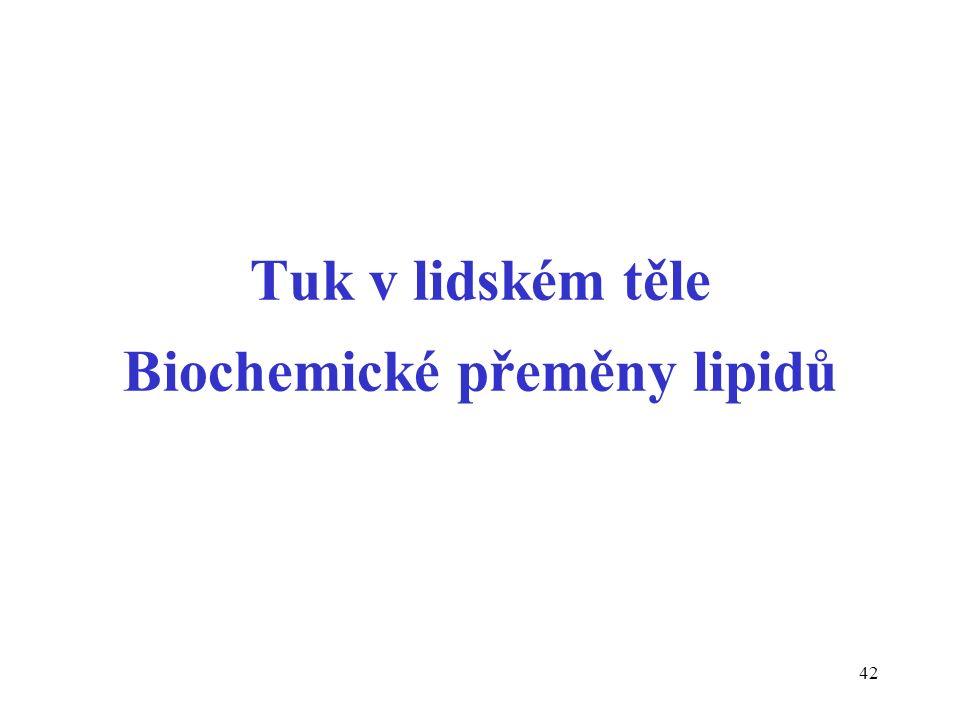 42 Tuk v lidském těle Biochemické přeměny lipidů