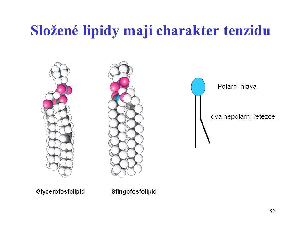 52 Glycerofosfolipid Sfingofosfolipid Polární hlava dva nepolární řetezce Složené lipidy mají charakter tenzidu