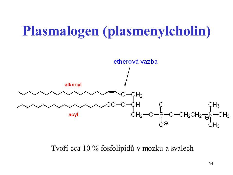 64 Plasmalogen (plasmenylcholin) Tvoří cca 10 % fosfolipidů v mozku a svalech