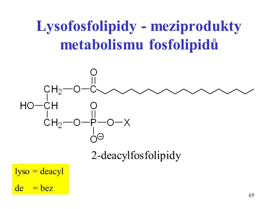 65 Lysofosfolipidy - meziprodukty metabolismu fosfolipidů 2-deacylfosfolipidy lyso = deacyl de = bez