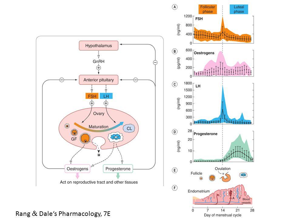 Gestageny (progestiny) PROGESTERON – nejdůležitější přirozený progestin Produkován – u žen - sekrece v corpus luteum primárně během 2.