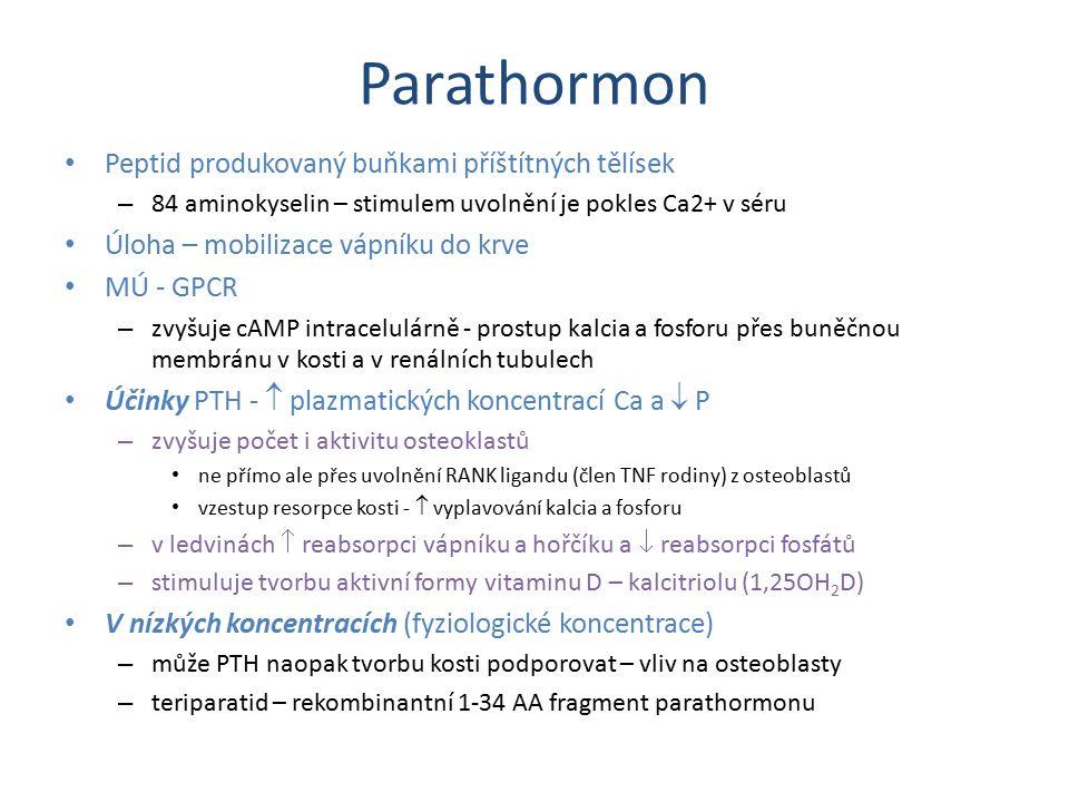 Parathormon Peptid produkovaný buňkami příštítných tělísek – 84 aminokyselin – stimulem uvolnění je pokles Ca2+ v séru Úloha – mobilizace vápníku do k