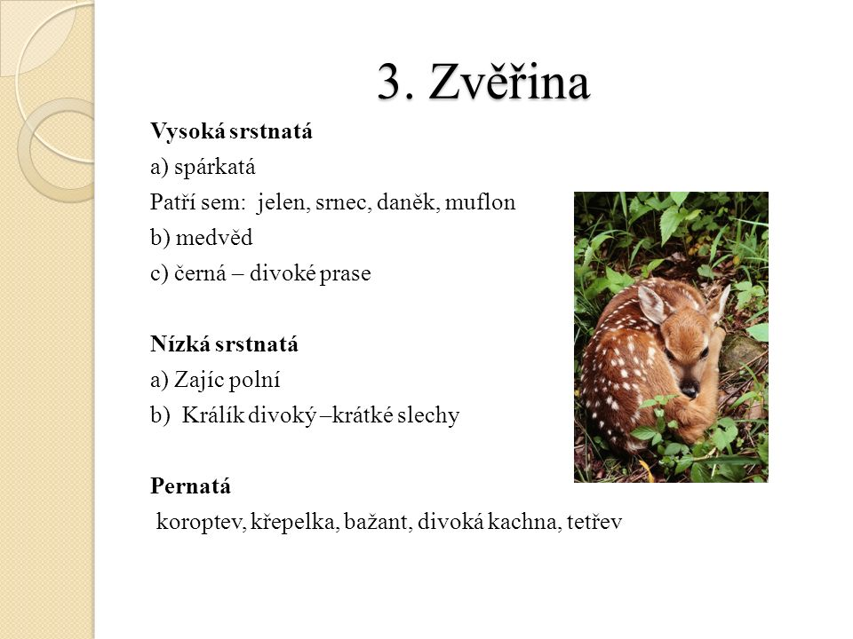 3. Zvěřina Vysoká srstnatá a) spárkatá Patří sem: jelen, srnec, daněk, muflon b) medvěd c) černá – divoké prase Nízká srstnatá a) Zajíc polní b) Králí