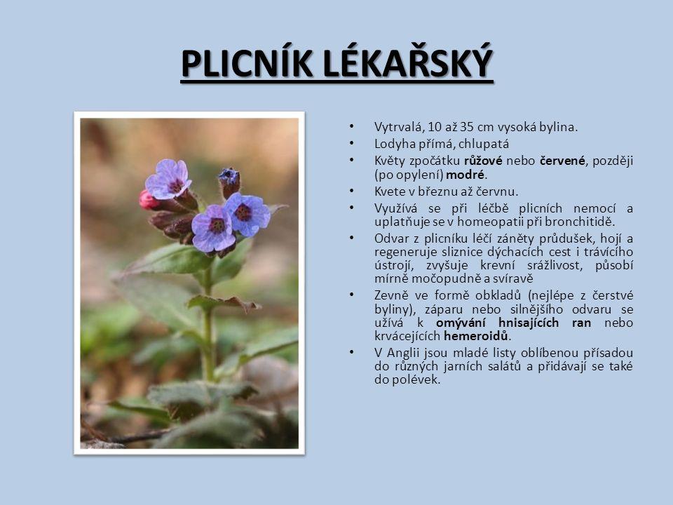 PLICNÍK LÉKAŘSKÝ Vytrvalá, 10 až 35 cm vysoká bylina. Lodyha přímá, chlupatá Květy zpočátku růžové nebo červené, později (po opylení) modré. Kvete v b