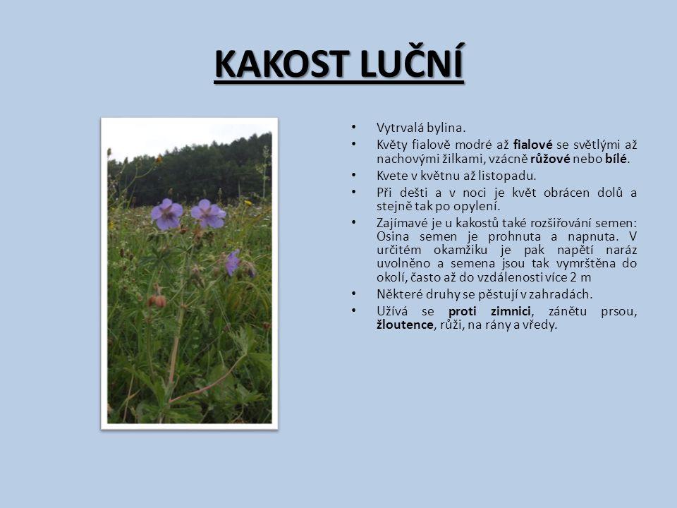 KAKOST LUČNÍ Vytrvalá bylina. Květy fialově modré až fialové se světlými až nachovými žilkami, vzácně růžové nebo bílé. Kvete v květnu až listopadu. P