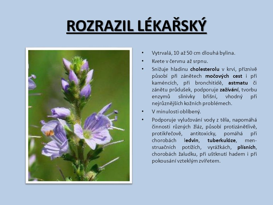 ROZRAZIL LÉKAŘSKÝ Vytrvalá, 10 až 50 cm dlouhá bylina. Kvete v červnu až srpnu. Snižuje hladinu cholesterolu v krvi, příznivě působí při zánětech močo