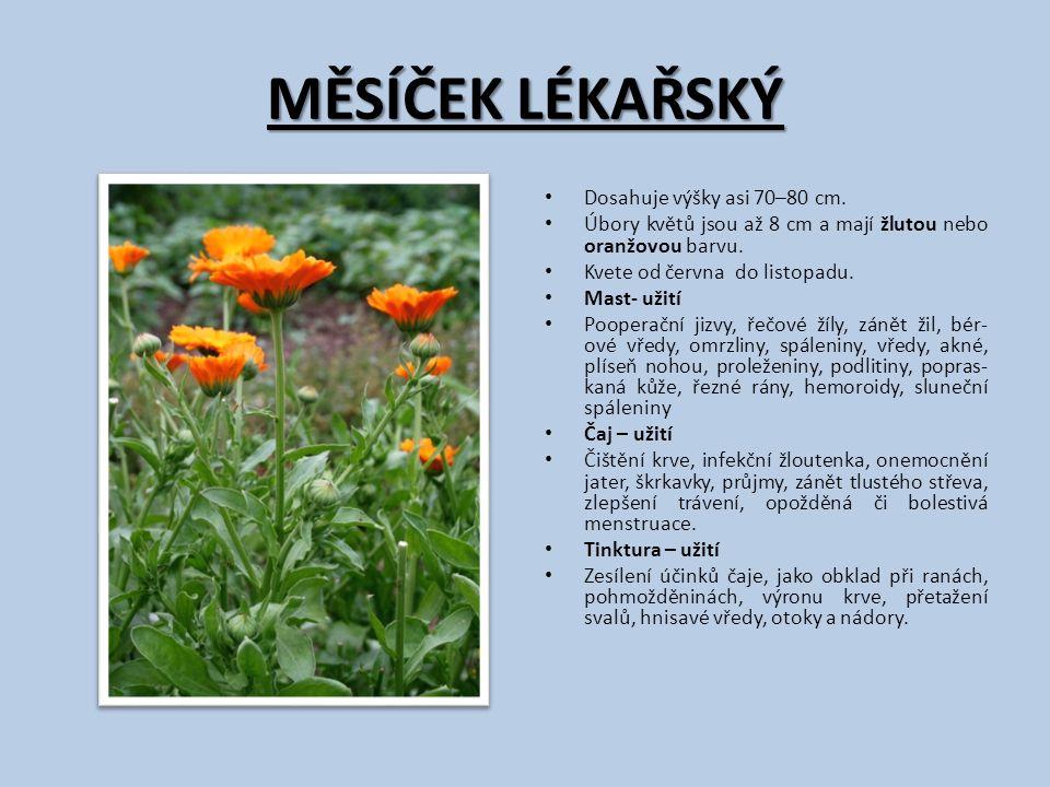 MĚSÍČEK LÉKAŘSKÝ Dosahuje výšky asi 70–80 cm. Úbory květů jsou až 8 cm a mají žlutou nebo oranžovou barvu. Kvete od června do listopadu. Mast- užití P
