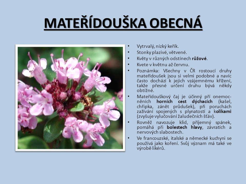 MATEŘÍDOUŠKA OBECNÁ Vytrvalý, nízký keřík. Stonky plazivé, větvené. Květy v různých odstínech růžové. Kvete v květnu až červnu. Poznámka: Všechny v ČR