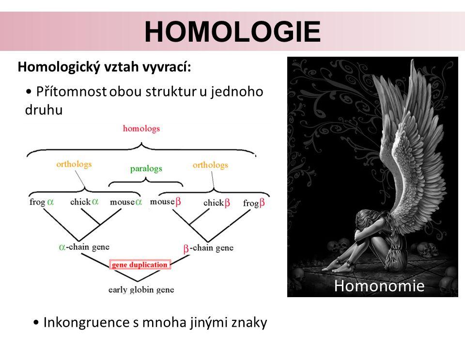 HOMOLOGIE Homologický vztah vyvrací: Přítomnost obou struktur u jednoho druhu Inkongruence s mnoha jinými znaky Homonomie
