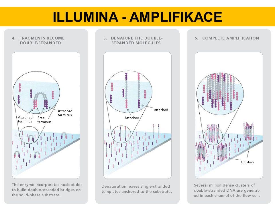 ILLUMINA - AMPLIFIKACE