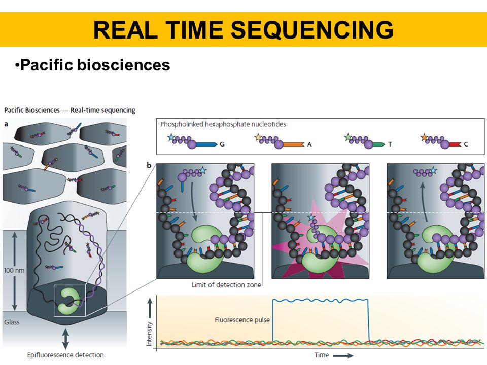 REAL TIME SEQUENCING Pacific biosciences