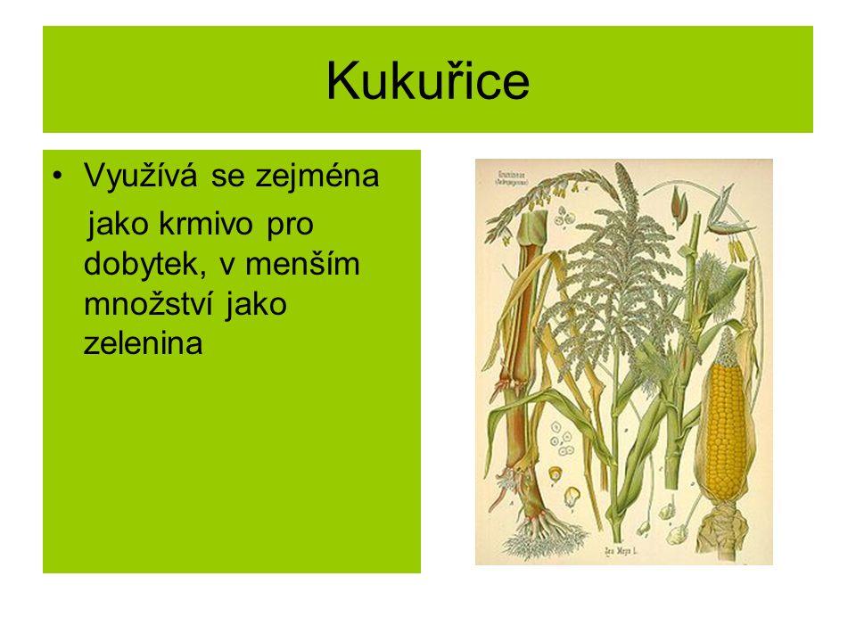 Kukuřice Využívá se zejména jako krmivo pro dobytek, v menším množství jako zelenina
