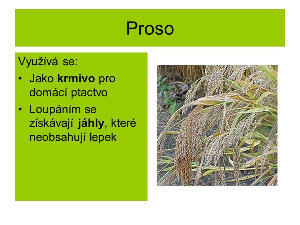 Proso Využívá se: Jako krmivo pro domácí ptactvo Loupáním se získávají jáhly, které neobsahují lepek