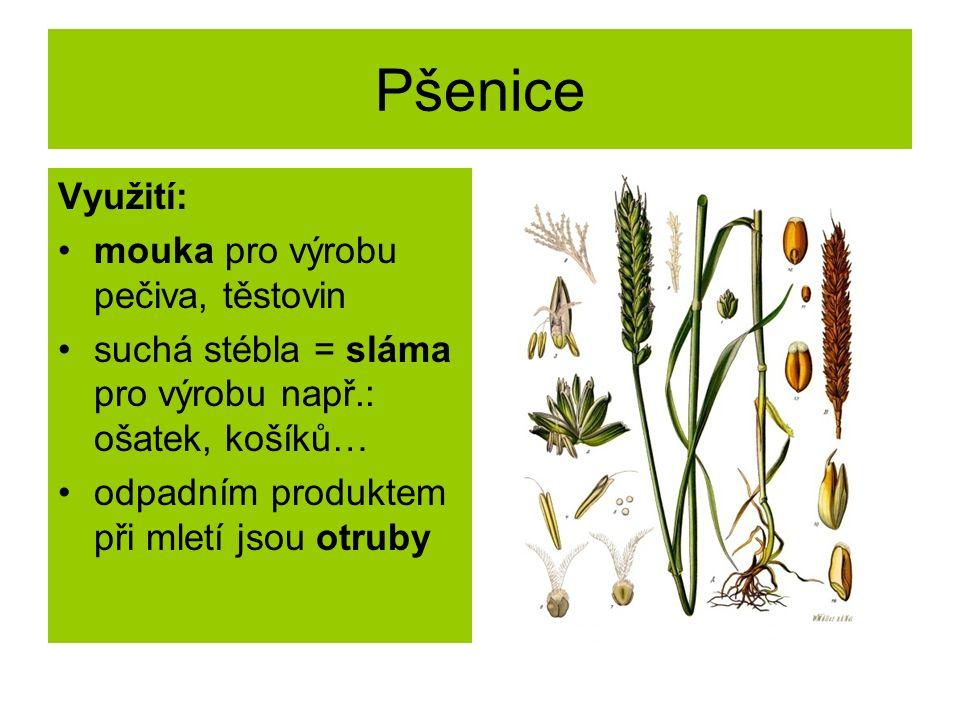 Pšenice Využití: mouka pro výrobu pečiva, těstovin suchá stébla = sláma pro výrobu např.: ošatek, košíků… odpadním produktem při mletí jsou otruby