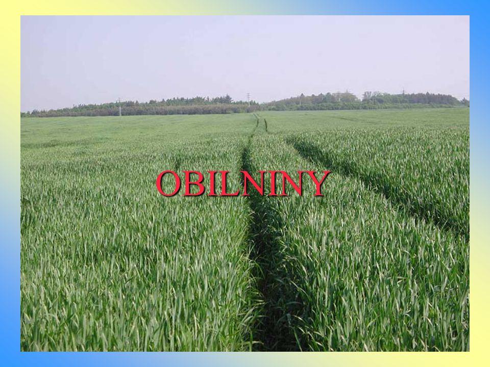 Obilka - nahá (pšenice, žito, žitovec, nahý oves) - pluchatá (ječmen, oves pluchatý) Květenství- klas (pšenice, ječmen, žito, žitovec, samičí květenství kukuřice) - lata (oves, samčí květenství kukuřice) Klíčení nahé obilky