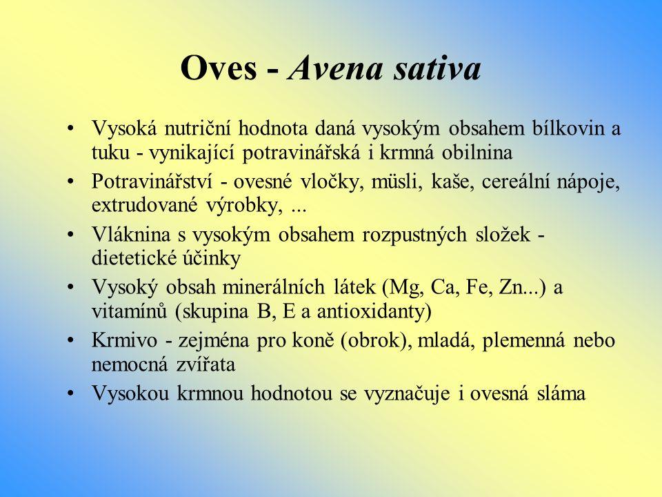 Oves - Avena sativa Vysoká nutriční hodnota daná vysokým obsahem bílkovin a tuku - vynikající potravinářská i krmná obilnina Potravinářství - ovesné v