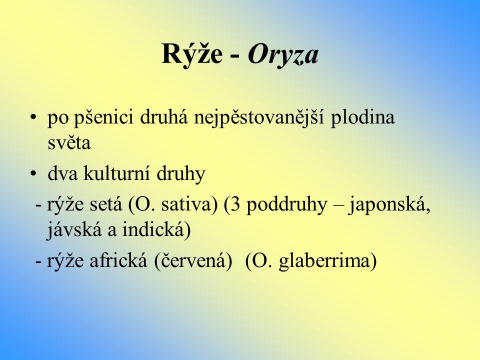 Rýže - Oryza po pšenici druhá nejpěstovanější plodina světa dva kulturní druhy - rýže setá (O. sativa) (3 poddruhy – japonská, jávská a indická) - rýž
