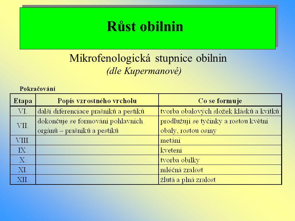 Růst obilnin Mikrofenologická stupnice obilnin (dle Kupermanové) Pokračování