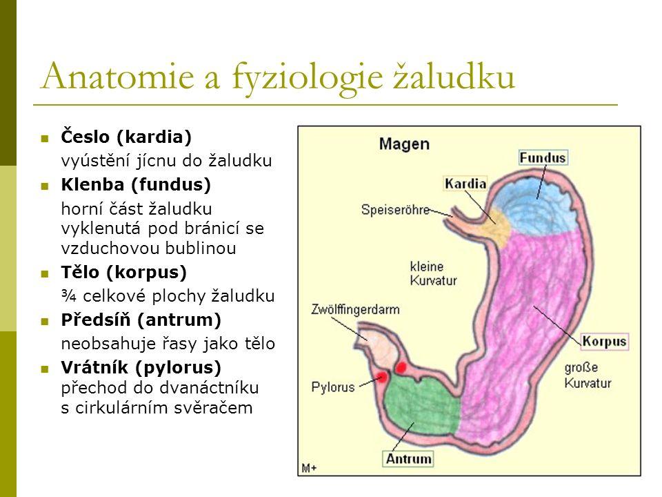 Anatomie a fyziologie žaludku Česlo (kardia) vyústění jícnu do žaludku Klenba (fundus) horní část žaludku vyklenutá pod bránicí se vzduchovou bublinou