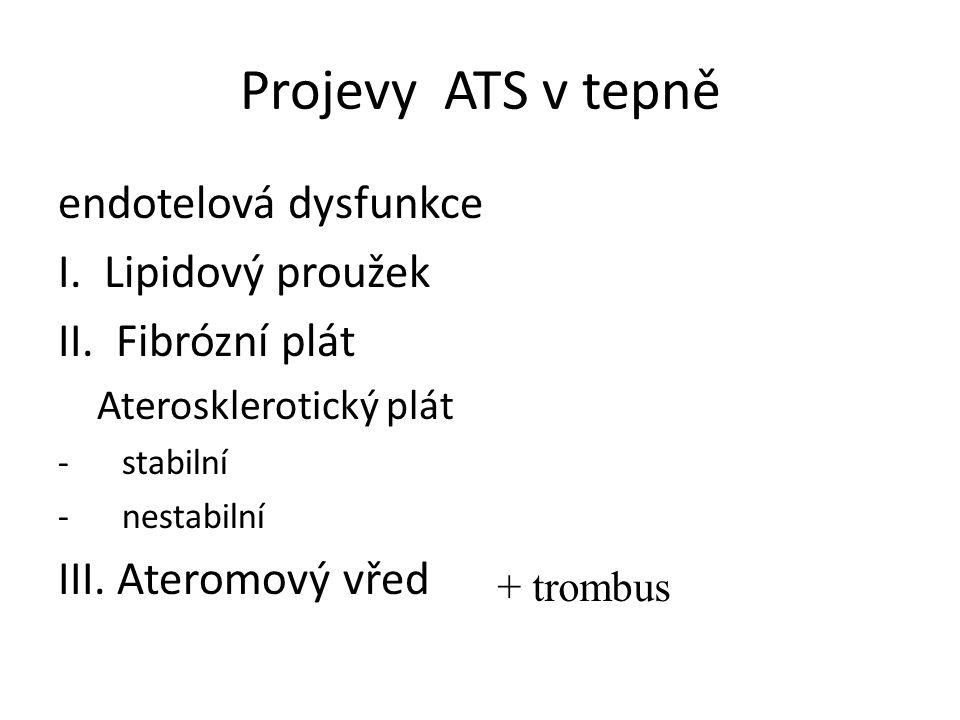 Projevy ATS v tepně endotelová dysfunkce I. Lipidový proužek II.