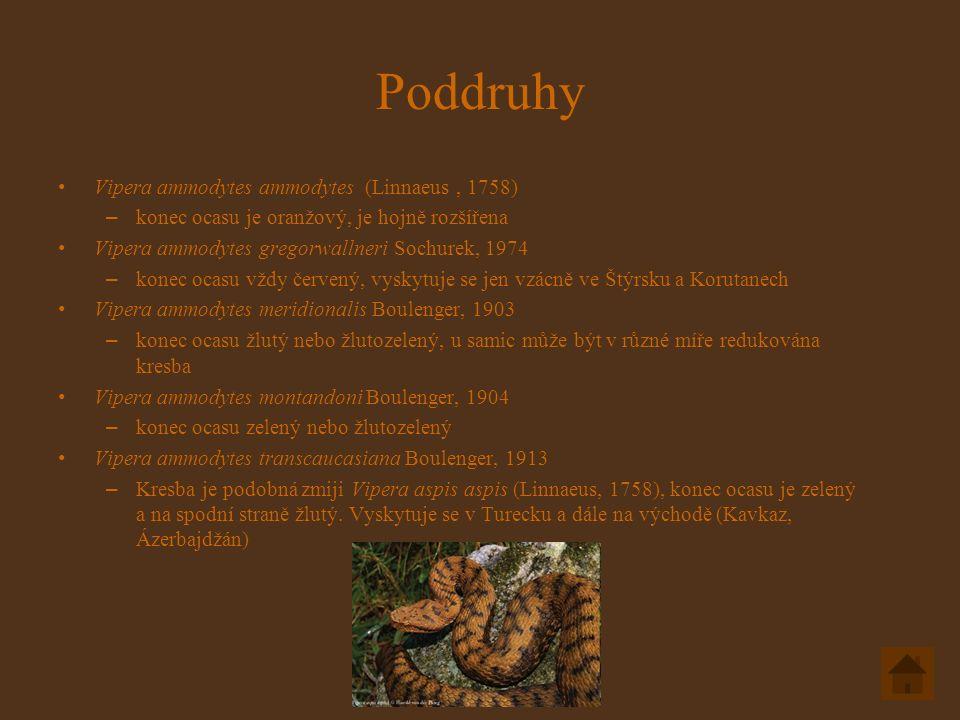 Poddruhy Vipera ammodytes ammodytes (Linnaeus, 1758) – konec ocasu je oranžový, je hojně rozšířena Vipera ammodytes gregorwallneri Sochurek, 1974 – konec ocasu vždy červený, vyskytuje se jen vzácně ve Štýrsku a Korutanech Vipera ammodytes meridionalis Boulenger, 1903 – konec ocasu žlutý nebo žlutozelený, u samic může být v různé míře redukována kresba Vipera ammodytes montandoni Boulenger, 1904 – konec ocasu zelený nebo žlutozelený Vipera ammodytes transcaucasiana Boulenger, 1913 – Kresba je podobná zmiji Vipera aspis aspis (Linnaeus, 1758), konec ocasu je zelený a na spodní straně žlutý.
