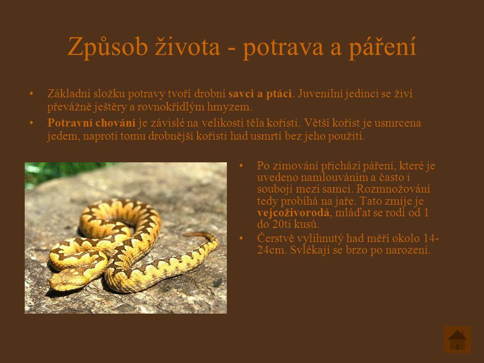 Způsob života - potrava a páření Základní složku potravy tvoří drobní savci a ptáci.