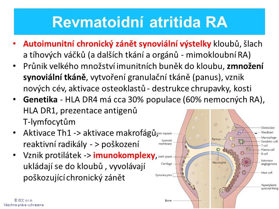 Revmatoidní atritida RA Autoimunitní chronický zánět synoviální výstelky kloubů, šlach a tíhových váčků (a dalších tkání a orgánů - mimokloubní RA) Průnik velkého množství imunitních buněk do kloubu, zmnožení synoviální tkáně, vytvoření granulační tkáně (panus), vznik nových cév, aktivace osteoklastů - destrukce chrupavky, kosti Genetika - HLA DR4 má cca 30% populace (60% nemocných RA), HLA DR1, prezentace antigenů T-lymfocytům Aktivace Th1 -> aktivace makrofágů, - reaktivní radikály - > poškození Vznik protilátek -> imunokomplexy, ukládají se do kloubů, vyvolávají poškozující chronický zánět © ECC s.r.o.