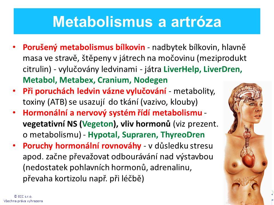 Metabolismus a artróza Porušený metabolismus bílkovin - nadbytek bílkovin, hlavně masa ve stravě, štěpeny v játrech na močovinu (meziprodukt citrulin) - vylučovány ledvinami - játra LiverHelp, LiverDren, Metabol, Metabex, Cranium, Nodegen Při poruchách ledvin vázne vylučování - metabolity, toxiny (ATB) se usazují do tkání (vazivo, klouby) Hormonální a nervový systém řídí metabolismu - vegetativní NS (Vegeton), vliv hormonů (viz prezent.