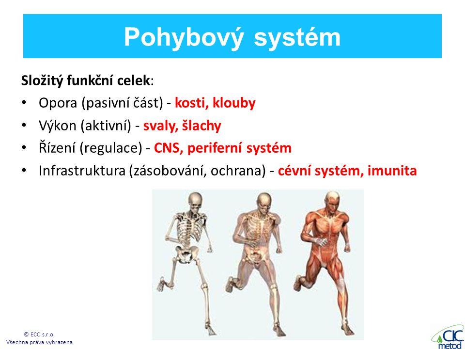 Pohybový systém Složitý funkční celek: Opora (pasivní část) - kosti, klouby Výkon (aktivní) - svaly, šlachy Řízení (regulace) - CNS, periferní systém Infrastruktura (zásobování, ochrana) - cévní systém, imunita © ECC s.r.o.