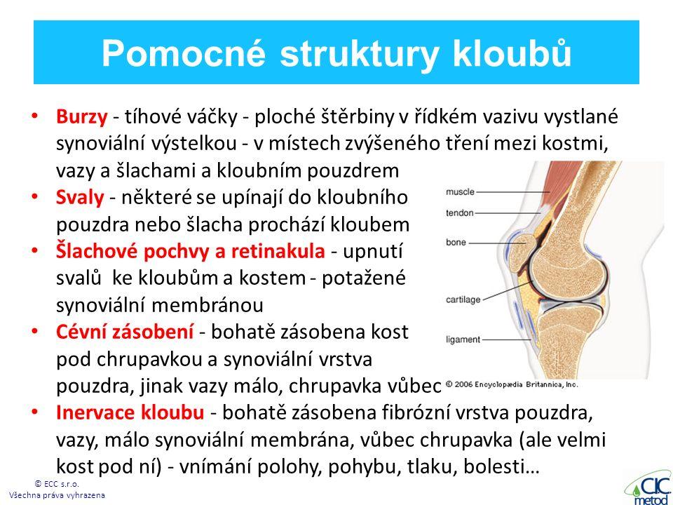 Pomocné struktury kloubů Burzy - tíhové váčky - ploché štěrbiny v řídkém vazivu vystlané synoviální výstelkou - v místech zvýšeného tření mezi kostmi, vazy a šlachami a kloubním pouzdrem Svaly - některé se upínají do kloubního pouzdra nebo šlacha prochází kloubem d Šlachové pochvy a retinakula - upnutí svalů ke kloubům a kostem - potažené synoviální membránou Cévní zásobení - bohatě zásobena kost pod chrupavkou a synoviální vrstva pouzdra, jinak vazy málo, chrupavka vůbec Inervace kloubu - bohatě zásobena fibrózní vrstva pouzdra, vazy, málo synoviální membrána, vůbec chrupavka (ale velmi kost pod ní) - vnímání polohy, pohybu, tlaku, bolesti… © ECC s.r.o.