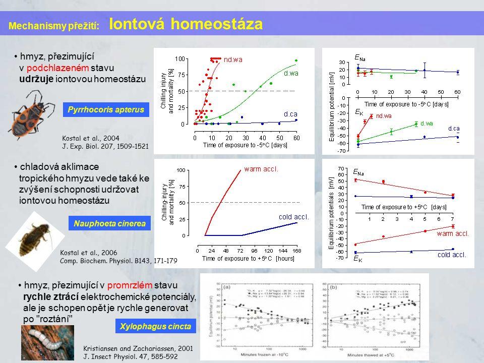 Mechanismy přežití: Iontová homeostáza hmyz, přezimující v podchlazeném stavu udržuje iontovou homeostázu Kostal et al., 2004 J. Exp. Biol. 207, 1509-