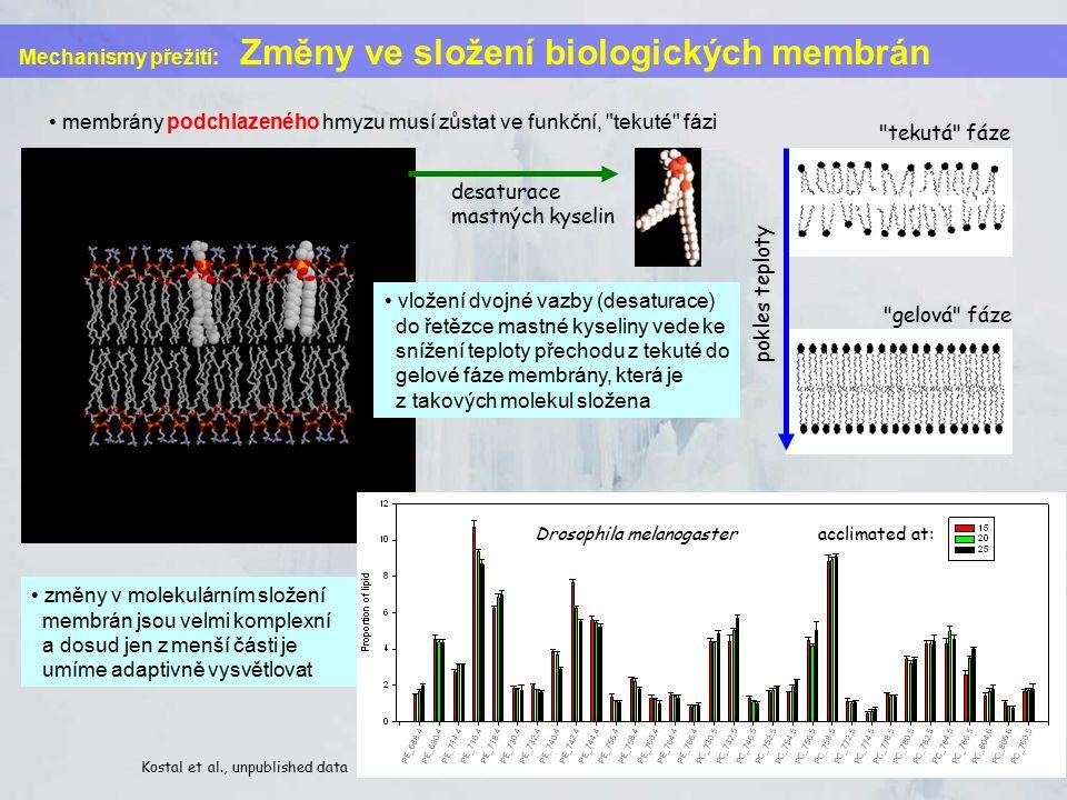 Mechanismy přežití: Změny ve složení biologických membrán membrány podchlazeného hmyzu musí zůstat ve funkční, tekuté fázi desaturace mastných kyselin tekutá fáze gelová fáze pokles teploty vložení dvojné vazby (desaturace) do řetězce mastné kyseliny vede ke snížení teploty přechodu z tekuté do gelové fáze membrány, která je z takových molekul složena změny v molekulárním složení membrán jsou velmi komplexní a dosud jen z menší části je umíme adaptivně vysvětlovat Kostal et al., unpublished data Drosophila melanogaster acclimated at: