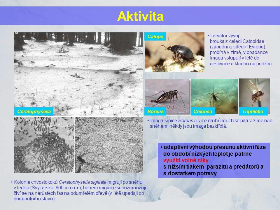 Aktivita Kolonie chvostokoků Ceratophysella sigillata migrují po sněhu v lednu (Švýcarsko, 600 m n.m.), během migrace se rozmnožují, živí se na nárůst
