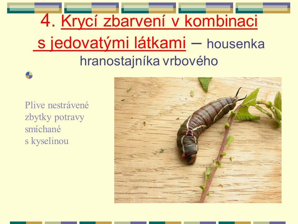 b) housenka lišaje Falešná hlava /připomíná hlavu hada/ Skutečná hlava